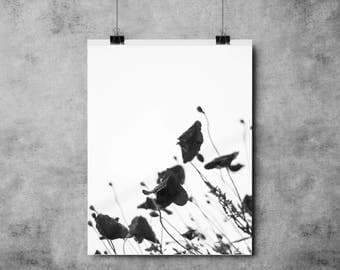 Black Poppies - (A4/A3) - Print / Poster / Plant / Flower / Botanical / Monochrome