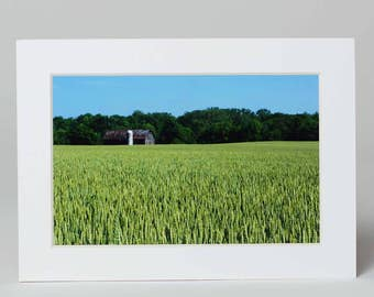 Cornfield with barn