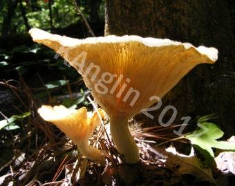 Fungi Dish