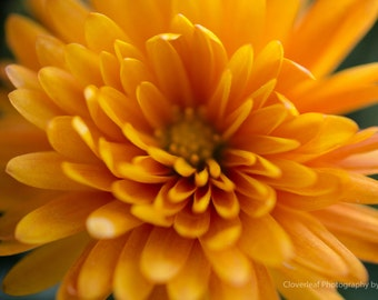 Yellow Flower, Nature Photography, Wall Art, Fine Art Photography, Home Decor