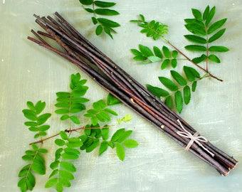 One bundle of natural tree rowan wood, dried rowan sticks, rowan twigs, woodland, forest, wedding favor decor, simple primitive decor