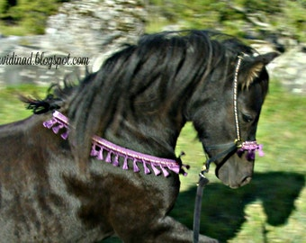 Small pony / miniature horse /arabian yearling presentation set/ arabian halter - showhalter with collar