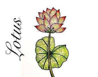 Lotus illustration Wall Botanical Art Print