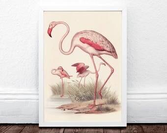 Vintage Flamingo Print, Flamigo Wall Art, Tropical Wall Art Decor, Bird Print, Flamingos Print, Pink and Green, Printable Instant Download