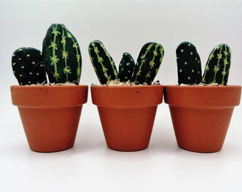 beach pebble catus in a pot set of 3