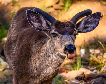 Download instant-photography of deer-high resolution 300 DPI-archive digital