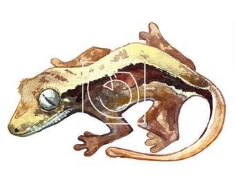 Ginko the Gecko