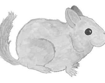 Print - chinchilla