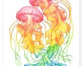 Rainbow Jellyfish A4 digital PDF download