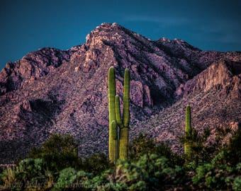 Arizona Sunset Cactus Scenery #1