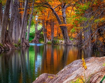 Autumn Landscape Photography - Texas Autumn Foliage - Cypress Trees - Nature - Hill Country - Guadalupe River
