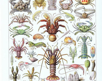 Sea Creature,Lobster,Crab,Ocean.Antique.French.Book Page.Original.Colour Plate.Color.Pretty picture.Vintage.Home Deco.Birthday Gift.art.eco