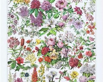 Flowers.Floral.Roses,Antique.French.Book Page.Original.Colour Plate.Color.Pretty picture.Twenties.Vintage.Home Deco.Botanic. Gift.art.boho