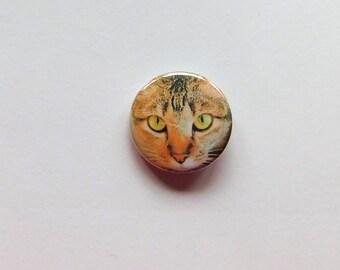 2 Buttons Katze