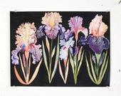 Five Bearded Irises- Larger archival prints