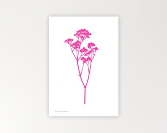 Gyp botanical print in flourescent pink limited edition Risograph 'Botanique Electrique' collection baby's breath