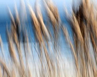 Sea Oats, Abstract Nature Photography, Brown and Blue, Modern Decor, Matted Print,  Ready to Frame