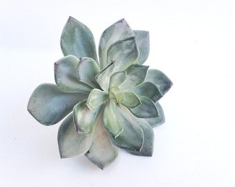Echeveria silver green, faux echeveria with silver green leaves, artificial succulent, size large, blue green succulent