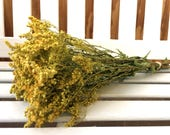 GOLDENROD Dried Flowers Dried Bunch Wedding flowers Country flowers bunch Cottage Floral Supplies filler Natural Shabby Dried Flower Bouquet