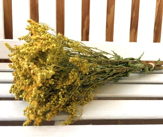 GOLDENROD Dried Flower Bunch Wedding flowers Country flowers Cottage Floral Supplies filler Natural Flowers Prim Shabby Dried Flower Bouquet