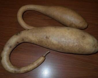 2 dried dipper gourds.