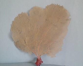 "13.2"" x 15"" Large Pink Seashells Reef Coral"