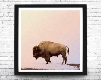 Buffalo Art Print, Animal Photography, Modern Home Decor, Buffalo Art Print, Buffalo Wall Art, Buffalo Picture, Square Print, Buffalo Print
