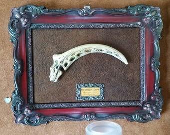 Elegant Framed Dragon Claw Artifact : Discarded item # 467
