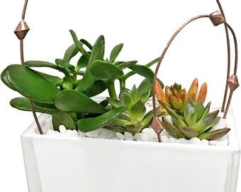 White Succulent Garden