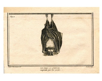 UPSIDE DOWN BAT -  suspended by his feet - modern gicle print - glorious creepy nature print