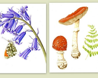 Pack of 2 A5 Botanical Greetings Cards; Fly agaric and bluebell