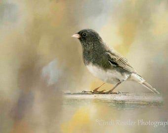 Dark-eyed Junco, Bird Photography, Bird Watchers, Nature Photography, Photography, Bird Photograph, Fine Art Photography