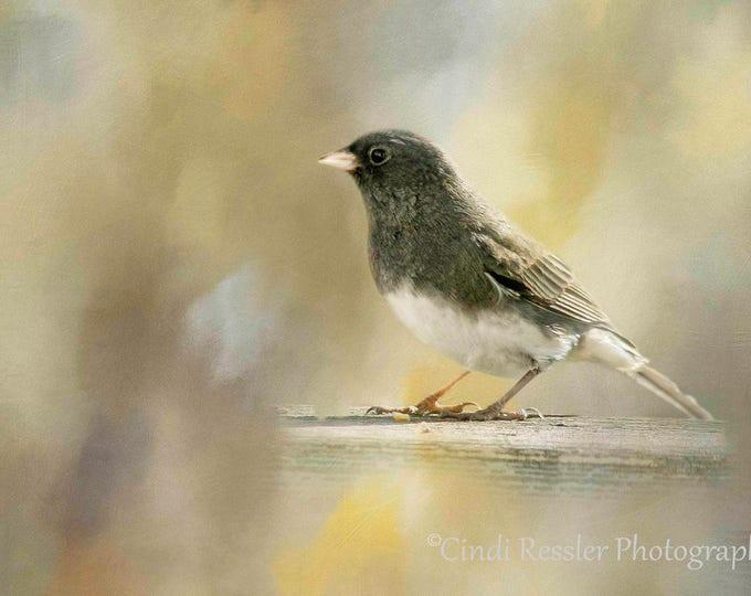Dark-eyed Juno, Bird Photography, Bird Watchers, Nature Photography, Photography, Bird Photograph, Fine Art Photography