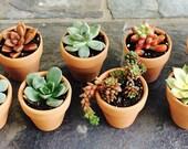25 Succulent Wedding Favors, Potted Plants, SUCCULENT Wedding, Wedding Favors, Baby shower, Bridal Shower