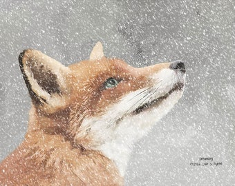 animal print, dreaming fox print, animal art, wildlife print, wildlife art, wildlife photography, wildlife picture, wildlife painting
