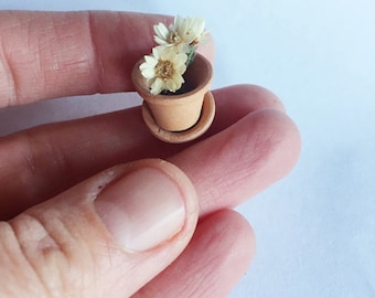 teeny tiny potted flower in terracotta