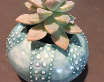 Sea Urchin, Sea Urchin Succulent Planter, Succulent Planter, Beach Theme, Easter Plant, Father's Day gift