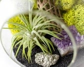 Air Plant Glass Terrarium Kit with Amethyst and Pyrite || February Birthstone || Gifts for Him || Office Decor || Medium Round Hanging
