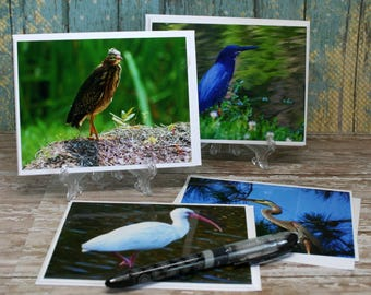 Blank Note Cards Featuring Original Photographs of Coastal SC Water Birds on 4x6 White Card Stock Set of 4