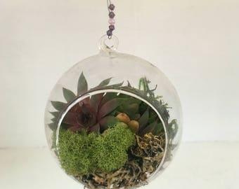 Succulent Terrarium, Hanging Succulent Terrarium, Hanging Succulents, Ecofriendly Gift, Succulent Garden, Glass Terrarium