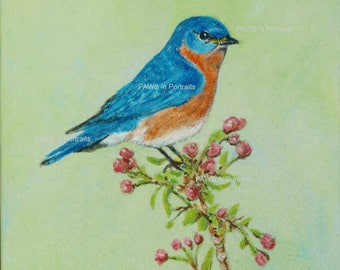 Eastern Bluebird portrait - Original - Hand painted - Signed - FREE Shipping