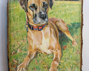 Custom Pet Portrait Drawing on Rustic Wood Slice, Custom Color Portrait, Drawing on Wood, Portrait from Photo