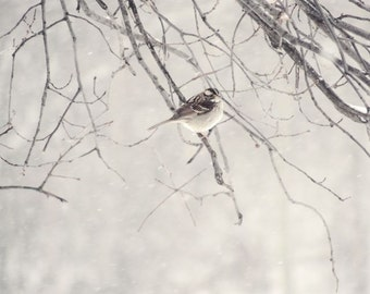 Bird Photograph - Winter Bird - Snowy Winter - Bare Tree and Bird - Pale Winter Scene - Nature Wall Decor - Romantic Art - Nature Photograph