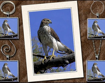 Cooper's Hawk Photo Note Card Set - Hawk Pendant, Hawk Keyring, Hawk Ornament, Hawk Wine Charm - Greeting Card Handmade (GP111)