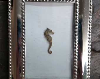The Lonely Seahorse in a frame