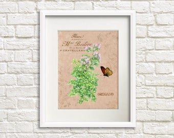 Herb Garden IV Oregano - Herb Artwork - Floral Art Print - 8x10 Print - French Country Style - Cottage Chic Style Decor