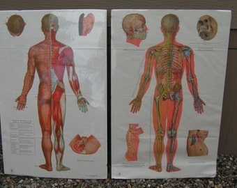 Vintage 70s Set of 6 XL Retro Anatomy Acupuncture Posters Charts Chinese Medicine Huge Anatomy Prints Human Body Diagrams