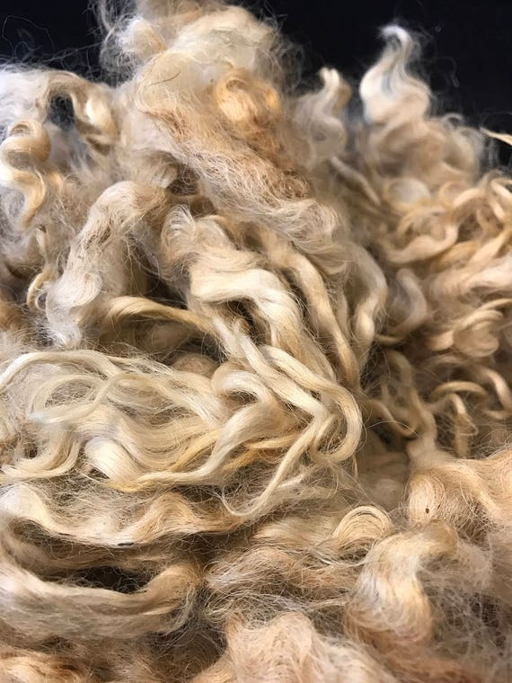 Raw Cotswold/ Wendsleydale fleece