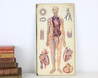Anatomy of the Female Body with Colour Plates 1944