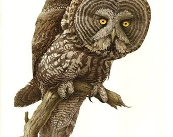 50% Off Estate Sale Vintage Great Gray Owl Poster, PMLansdowne, Glossy Print of Bird Watercolor by  J.F. Lansdowne, 11 x 14 Wall Art